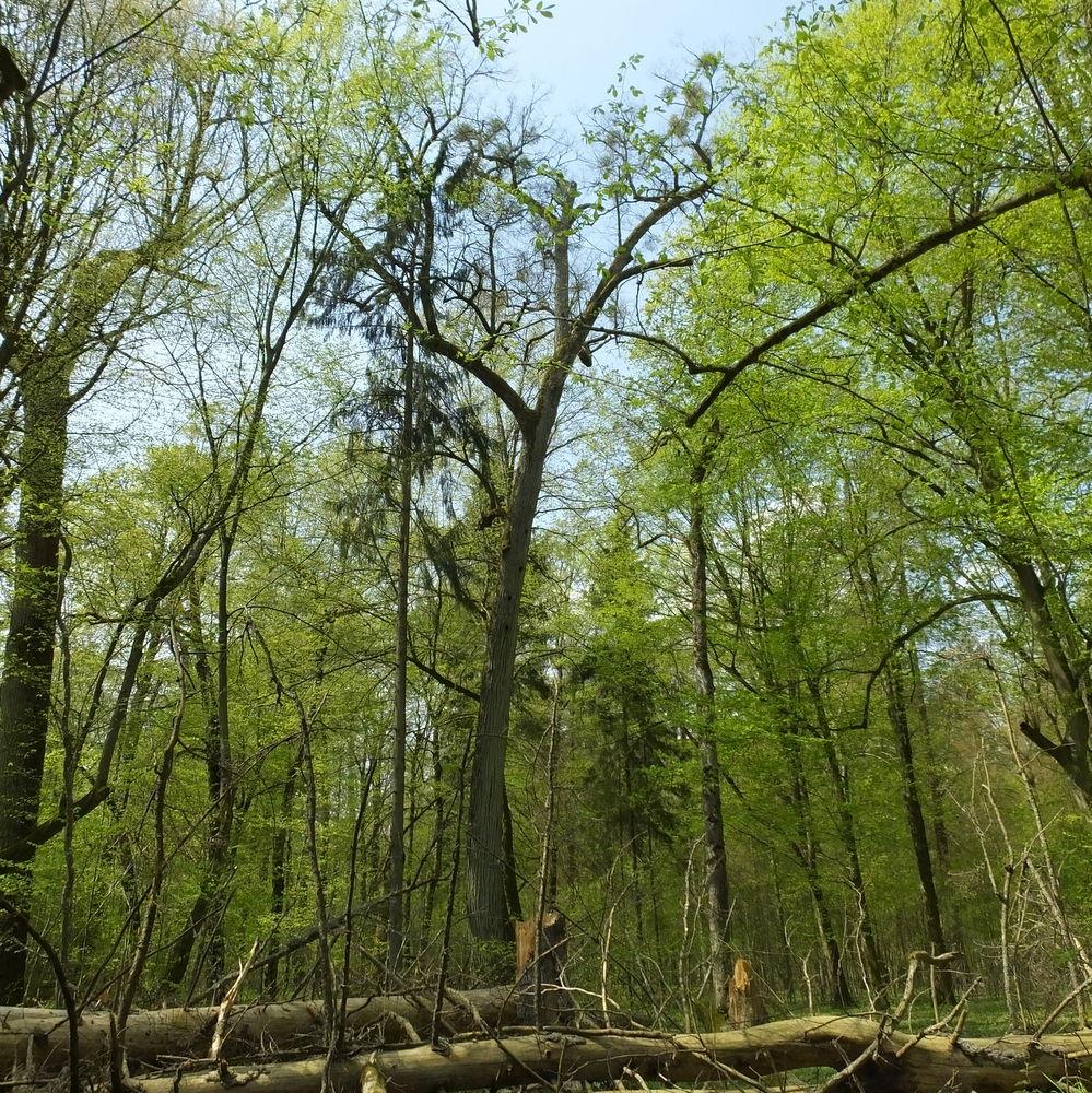 RikenMons blog Poolse bossen