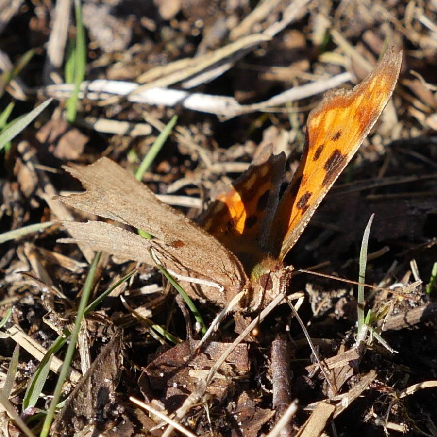 RikenMon blog voorjaar vlinder