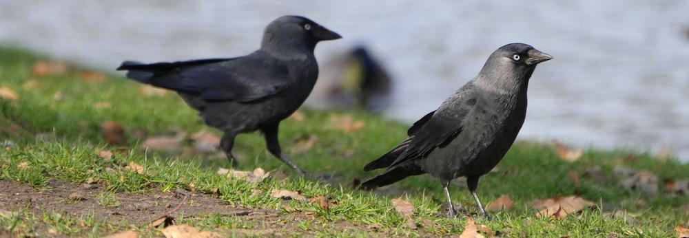 RikenMon blog vroege vogel
