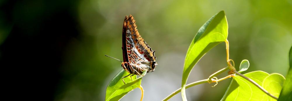 RikenMons Natuurblog Vlinders en Aardbeien